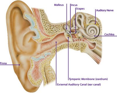 Ear problems in Diabetics
